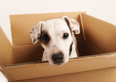 Moving and Packing with Pets